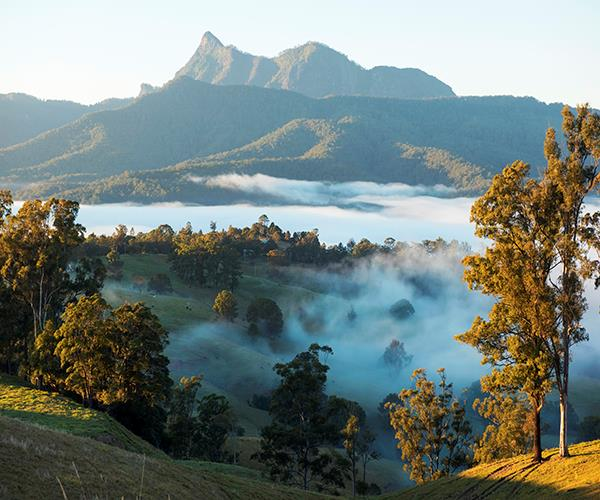 The Tweed region is the perfect combination of coastal, hinterland and rainforest.