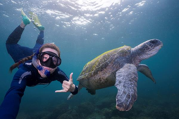 You can get this up close and personal with turtles on your Watersports Guru tour.