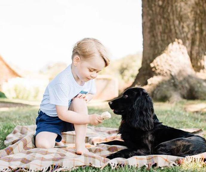Who could forget this iconic snap, when Prince George fed Lupo some ice cream as he posed for his third birthday portrait.