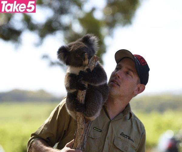 My husband Wade and I run Southern Koala Rescue.