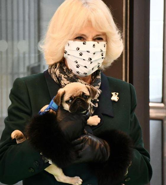 Camilla even wore a dog-appropriate face mask.