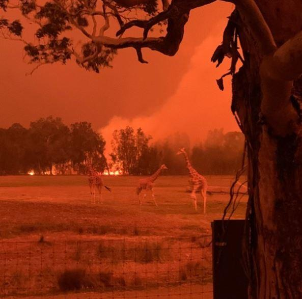 Mogo Zoo during the 2020 bushfires.