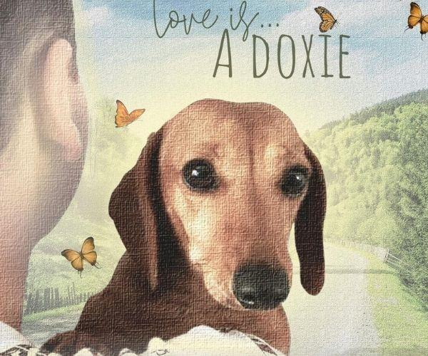Pip's story features on the podcast, Love Is A Doxie.