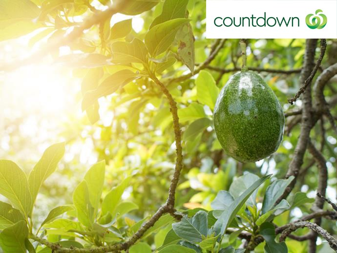 Avocados grow on evergreen trees that can grow up to 12 metres in height.