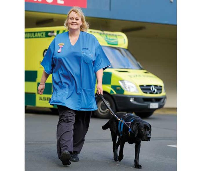 Brenda and Pip get ready for another day of work at Dunedin Hospital.