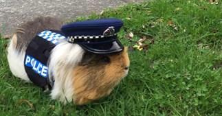 Constable Elliot