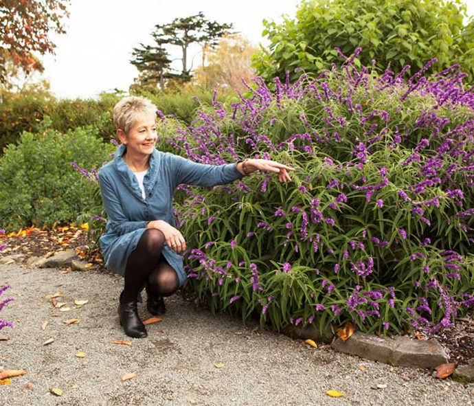 Helen wants Kiwis to create bee pathways by sowing wild flowers across the country.