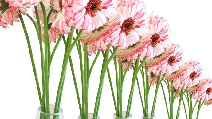 6 simple ways to make your flowers last longer