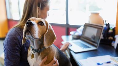 What you need to know about Pets at Work Day