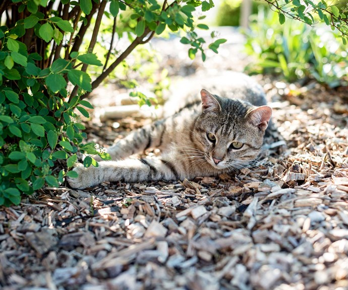 Mulch your garden to keep weeds down, retain moisture and give your cat somewhere warm to sit.
