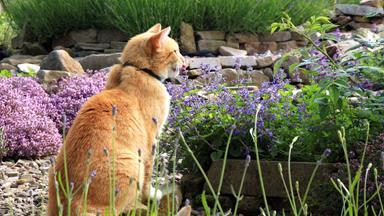 How to make a cat-friendly garden