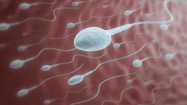 Kiwi expert explains why men's sperm counts have halved