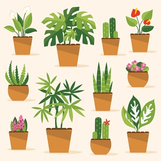 How to keep your house plants alive during winter
