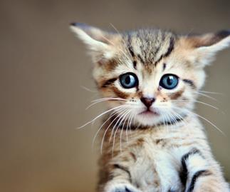 The meditation video that uses cute kittens to help calm you