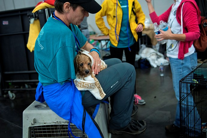 A vet holds dog in shelter at the George R. Brown Convention Center in Houston.