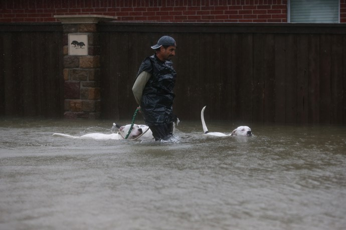 A resident of Clodine leads his dogs out of the flood zone.