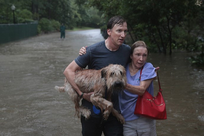 Andrew White helps a dog and a neighbor down a flooded street after rescuing them from their homes.