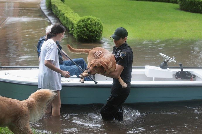 A volunteer helps a resident with her dogs in Houston.