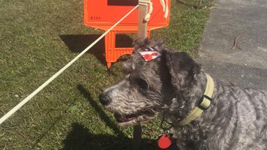 The dogs at today's polling stations