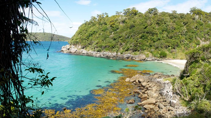 Things to do in Stewart Island