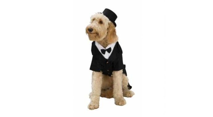 **Dapper** The great thing about this one is your pooch can wear it again the next time he attends a wedding.