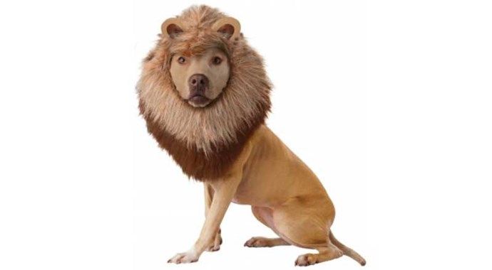 **Lion** If we told you your pet would enjoy it, we'd be lion.