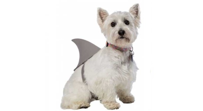 **Shark Fin** Simple, adorable, won't bother your pet and would look great if you happen to be trick or treating near a beach.