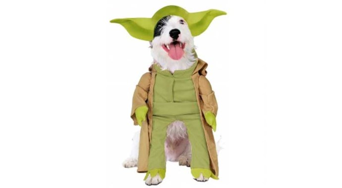 ***Star Wars* Yoda** Amused your pet will not be.