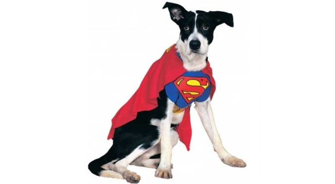 **Superman** Your dog really will be faster than a speeding bullet the second time he sees you coming to trying to put this on him or her.