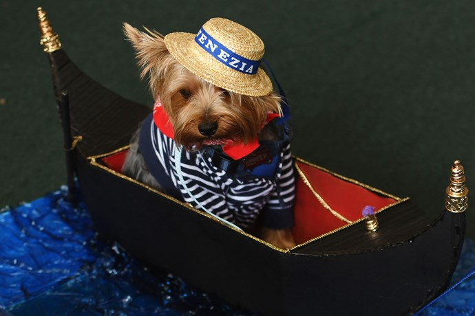 This is just too dog-gondola good.