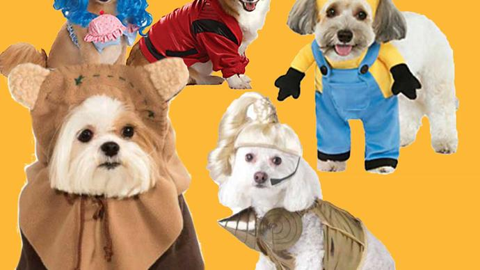 Pet costumes for your dog to wear this Halloween