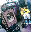Mum and child forced to stand in bus because CAT in pram had the pram space