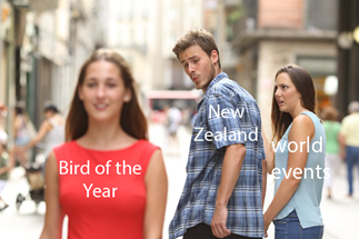 Bird of the Year has gotten out of hand