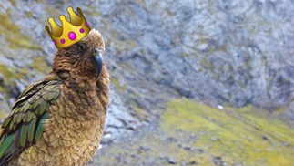 The Kea wins Bird of the Year 2017