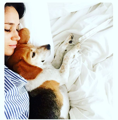 Meghan Markle is moving her dogs to London in yet another sign of a royal engagement