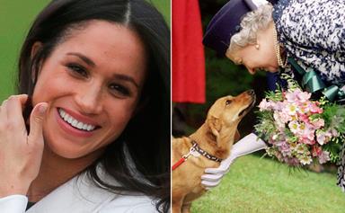 When Meghan Markle met The Queen's corgis