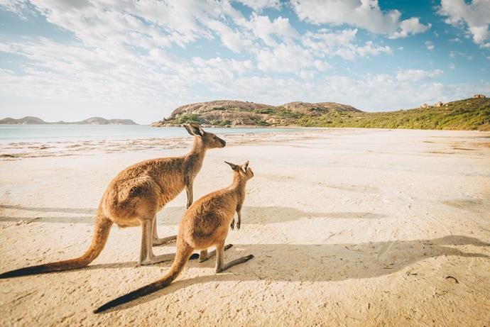 Australia is our favourite overseas holiday destination.