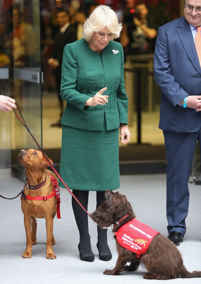 'Sit! Good boy! If only Charles were this well behaved.'