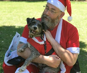 This Auckland schnauzer party is the cutest thing you'll see today
