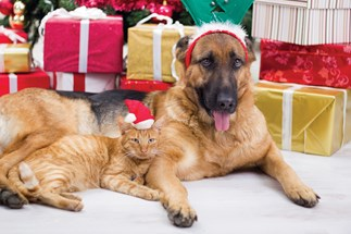 SPCA pets won't miss out on presents this Christmas