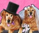 Glorious pictures of animals crashing wedding photos