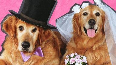 Glorious pictures of animals crashing wedding photos