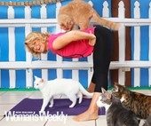 The yoga class for cats