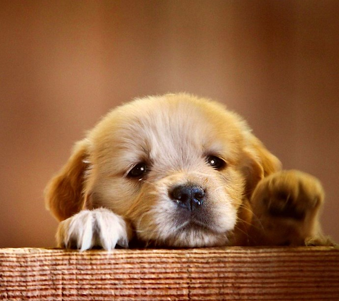 How to take care of a puppy after you bring them home