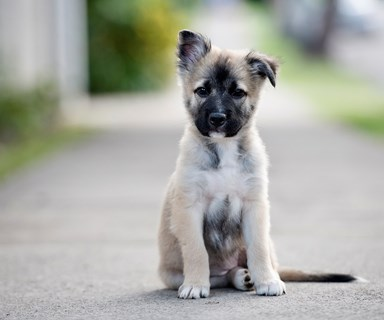 The five things you must do when training a puppy