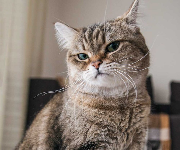 Five ways to read your cat like a furry book