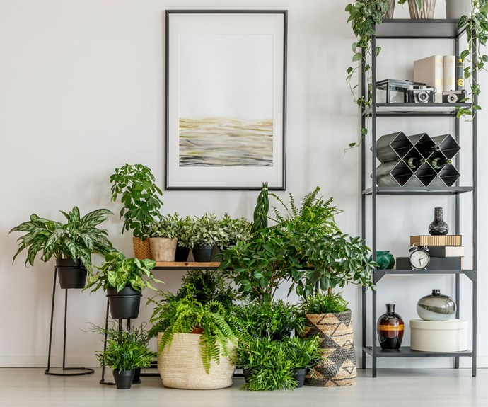 The health benefits you'll enjoy when you bring nature into your home