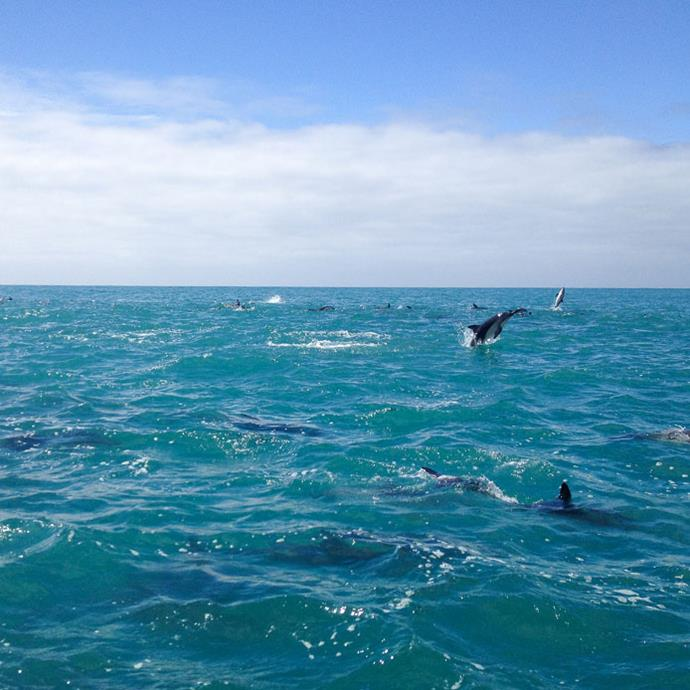"Meghan described swimming with this pod of dolphins as an ""unforgettable experience."""