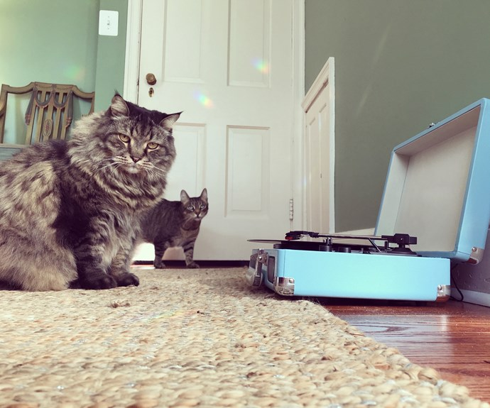 Scientists discover what kind of music cats like listening to