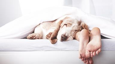 No, sharing the bed with your dog won't really 'ruin' your sleep